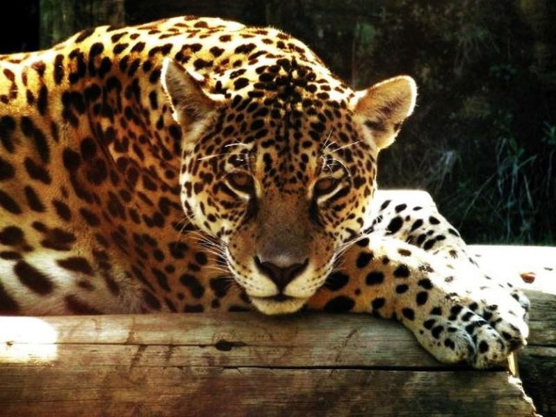 Gramado Zoo: conheça algumas das atrações que o Zoológico de Gramado oferece!